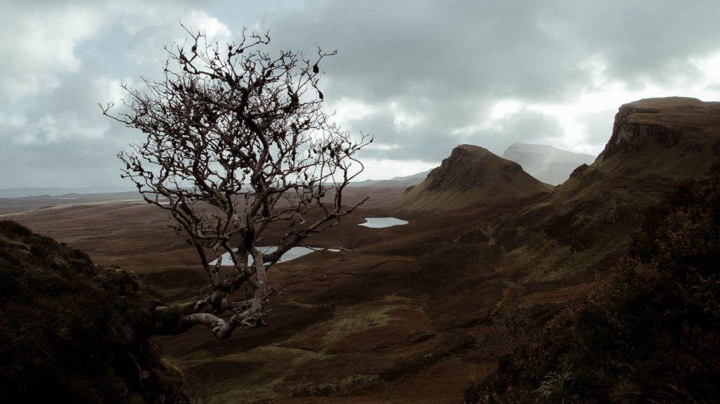 the quiraing view with lone tree